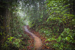Path in the jungle. Sinharaja rainforest in Sri Lanka. Royalty Free Stock Photos