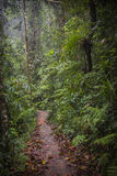 Path in the jungle. Sinharaja rainforest in Sri Lanka. Royalty Free Stock Image