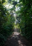 Path in the jungle with sunlight through foliage Royalty Free Stock Image