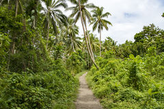 Path in Jungle, Solomon Islands Stock Photo