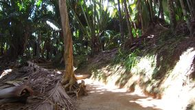 Path in jungle woods with palm trees at africa