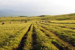 Path in kalajun grassland Stock Image