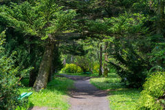Path. Kaliningrad, Russia - may 19, 2015:the Path in the Botanical garden of Kaliningrad Stock Photo
