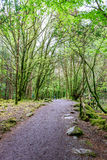 Path in Killarney National Park Stock Image
