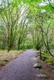 Path in Killarney National Park. Path leading to Torc Waterfall in Killarney National Park Stock Image