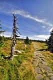 Path in Krkonose Stock Photos