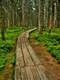 Path in Krkonose. Path between trees in Krkonose mountain. Czech Republic Stock Photo