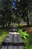 Path in Krkonose Royalty Free Stock Photo