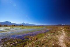 Path by the lake. Lashihai lake, Yunnan province, China Royalty Free Stock Image