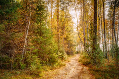 Path lane way pathway in beautiful wild autumn Royalty Free Stock Images