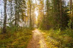 Path, lane, way, pathway in wild autumn forest Stock Photo