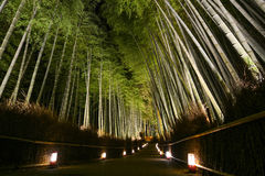 Path of lanterns in a bamboo forest for the night illumination festival in Kyoto, Japan Stock Photos