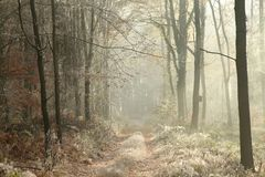 Country road through a frosted autumn forest at dawn royalty free stock photo