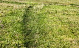 Path on the lawn. Trampled path on the green grass growing in the field. Photo close-up in spring Royalty Free Stock Photos