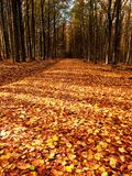 Path leading among the beech trees in early autumn forest. Fresh colors Stock Photo