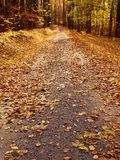 Path leading among the beech trees in early autumn forest. Fresh colors Royalty Free Stock Image