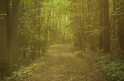Path leading through the dark forest Stock Photo