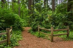 fences beside a dirt path in the forest royalty free stock photos