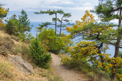 Path leading down to the Black Sea Stock Photography