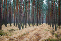 Path leading through the forest. In Poland Stock Photography