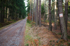 Path leading through the forest. In Poland Royalty Free Stock Image