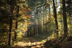 A trail through an autumn forest in the sunshine royalty free stock photography