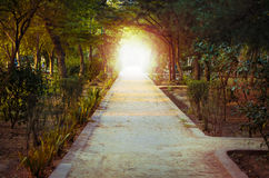 Path leading to magical mystery woods Stock Photography