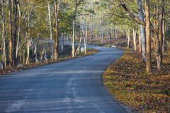A path leading to the unknown - Nagarhole stock photos