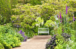 Path leading to white bench in English cottage garden. White bench at the end of sandy path under white and blue wisteria, surrounded by colourful cottage Royalty Free Stock Photography