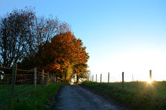 Path leading uphill to sunlit autumn trees at sundown. Path leading uphill to sunlit autumn trees as the sun sets beyond the hill Royalty Free Stock Photo