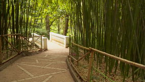 The path leads through a bamboo grove stock video