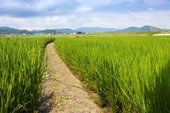 A path leads through a Rice Paddy field near Arashiyama Japan royalty free stock photography