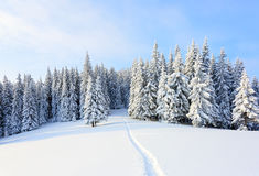 The path leads to the snowy forest. Stock Image