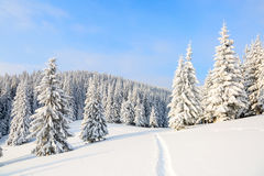The path leads to the snowy forest. Royalty Free Stock Photography