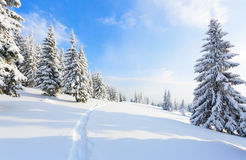 The path leads to the snowy forest. Stock Images