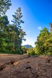 Path leads into the trees in jungle forest Stock Photo