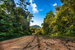 Path leads into the trees in jungle forest Royalty Free Stock Photo