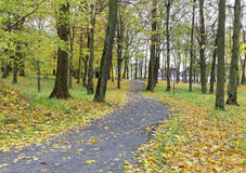 Path and leafes in the park. Path covered with leafes in the public park during autumn Stock Photography