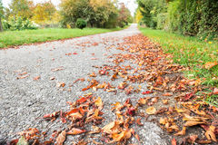 Path with leafs in autumn colouring Stock Photography