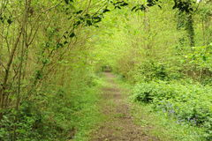 Path through leafy woodland Royalty Free Stock Photo
