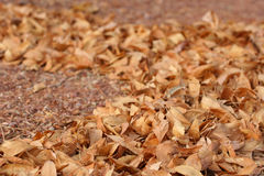 Path of leaves. On the ground Royalty Free Stock Photo
