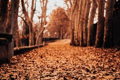 Path of leaves in autumn royalty free stock image