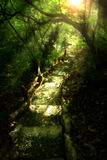 The Path Lies Here. One of the many paths along the man-made forest in Taytay, Philippines. Kinda evokes a lord of the rings feel Stock Photos