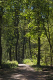Path with light and shadows. In Black forest, Germany Stock Photography