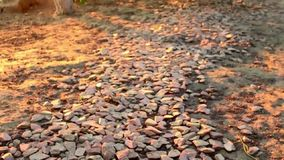 Path lined with stones. Sunset stock video footage