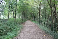 A path. Lined by trees on the lake shore on an autumn day Royalty Free Stock Photo
