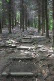 Path of Ljubljana forest, Slovenia. Wooden path in Ljubljana forest, Slovenia Royalty Free Stock Images