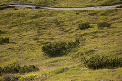 A path long an alpine meadow in the dolomites Stock Images