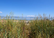 Path through the Long Grass to the Beach on a sunny day. Perfect day for a beach escape, on Vancouver island this path through the grass leads right to the ocean Stock Image