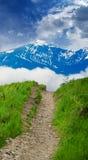 Path through lush countryside Stock Photography